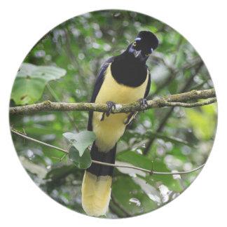 Critical Bird Plate