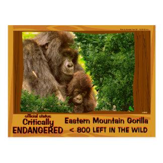 CRITICALLY ENDANGERED: Eastern Mountain Gorilla - Postcard