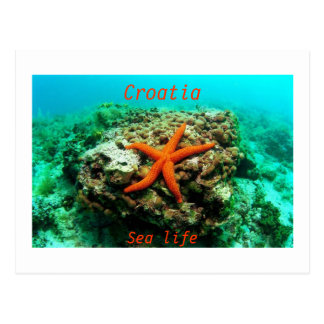 Croatia - Sea life Postcard