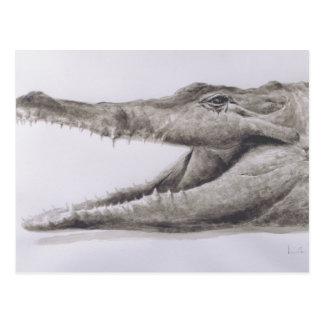 Crocodile 2005 postcard