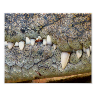 Crocodile alligator tooth poster
