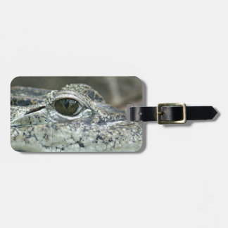 Crocodile Eye Luggage Tag