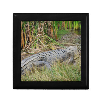 CROCODILE QUEENSLAND AUSTRALIA GIFT BOX
