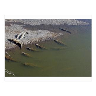crocodile river postcard