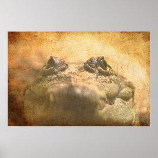 Crocodylus Moreletii Close up Poster
