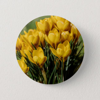 crocus 2 inch round button