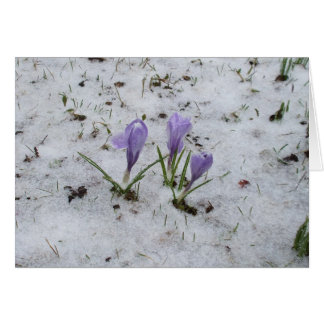 Crocus-Blank Card