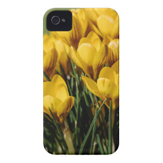 crocus Case-Mate iPhone 4 cases