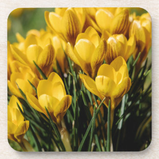 crocus coaster