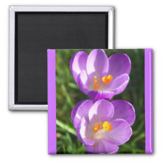 Crocus couple magnet