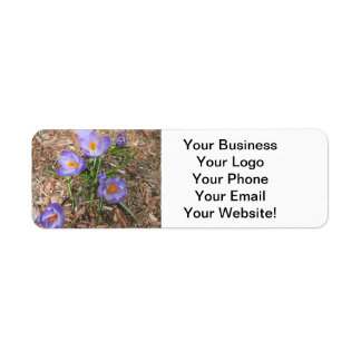 Crocus Flower in Bloom Return Address Label