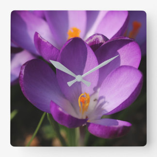 Crocuses Square Wall Clock