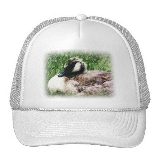 Croquis canadien de photo d'oie de bébé casquettes