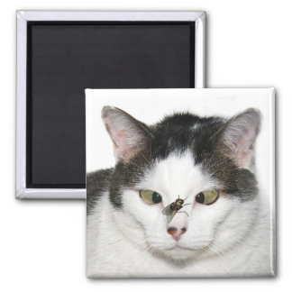 Cross eyed cat and fly square magnet
