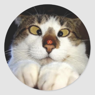 Cross Eyed Cat And Ladybird Classic Round Sticker