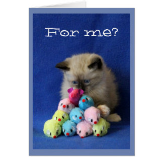 Cross-Eyed Kitten with Toy Mice Card