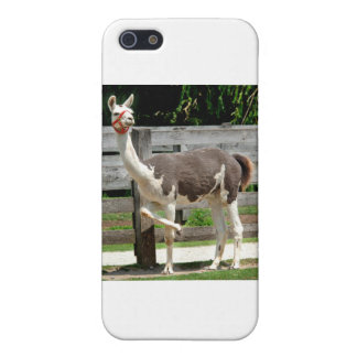 Cross-Legged Llama iPhone Case Case For iPhone 5/5S