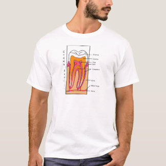 Cross Section Diagram of a Human Tooth T-Shirt