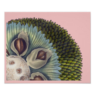 Cross Section of a Breadfruit - Tropical Foods Poster