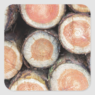 -Cross sections of pine trunks Square Sticker