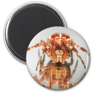 Cross spider on a mirror magnet