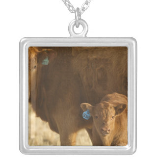 Crossbred cow with calf near Choteau, Montana, Silver Plated Necklace