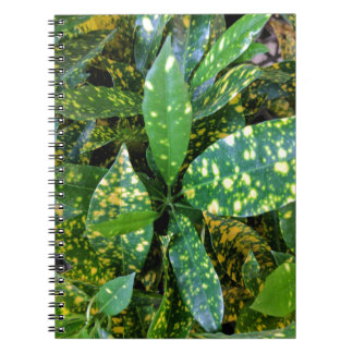 Croton Plant Notebook