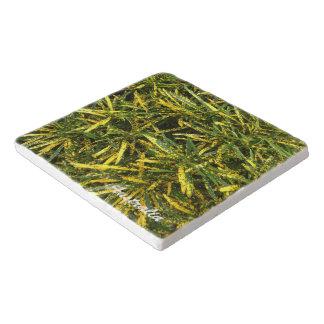 Croton stone trivet