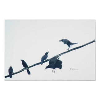 Crow birds acrobatics Poster