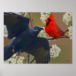 crow cardinal posters