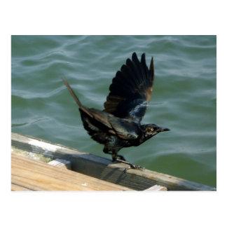 Crow Customizable Postcard