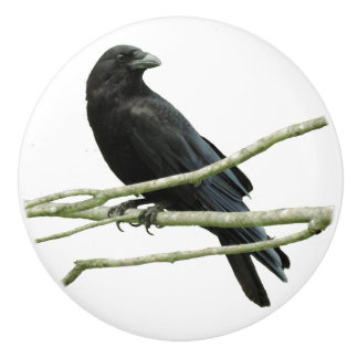 Crow Drawer Knob