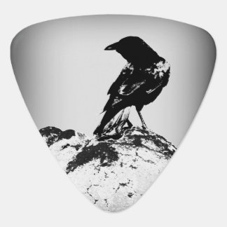 Crow Guitar Pick / Photography by Todd D. Martin