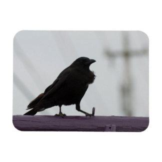 Crow on Purple Rectangular Photo Magnet