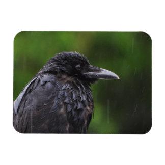 Crow or Raven in the Rain Rectangular Photo Magnet
