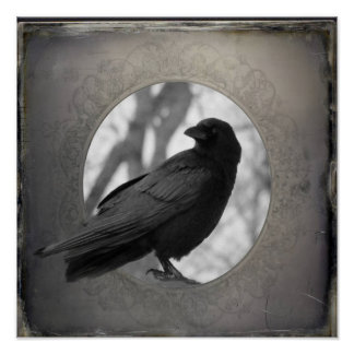 Crow Portrait Poster
