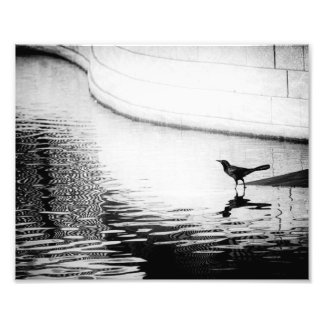Crow Reflected in Water - B&W Photograph