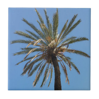 crown of a palm tree tiles