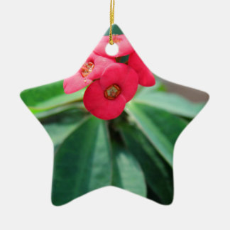 Crown of Thorns Ceramic Star Ornament