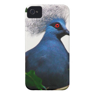 Crowned Pigeon Case-Mate iPhone 4 Cases