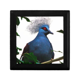 Crowned Pigeon Jewelry Box