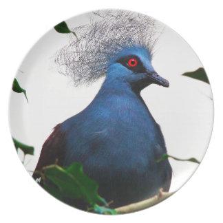 Crowned Pigeon Plate