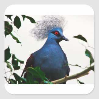 Crowned Pigeon Square Sticker