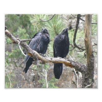 Crows in Colorado Photo Print
