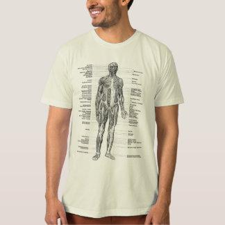 Cru - l'anatomie humaine Muscles des vues avant et Tee-shirts