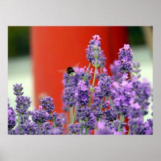 """Cruising in lavender world"" Poster"