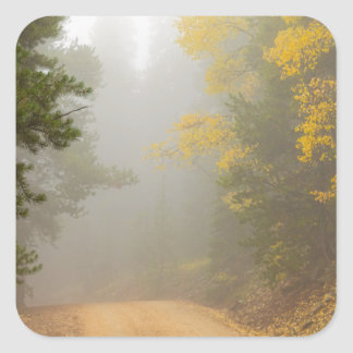 Cruising Into Autumn Fog Square Sticker