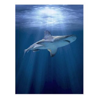 Cruising Shark Postcard