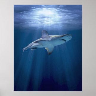 Cruising Shark Posters