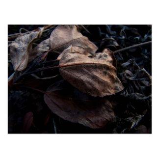 Crunchy Leaf Litter Postcard